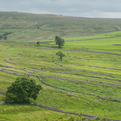 Walling above Malham