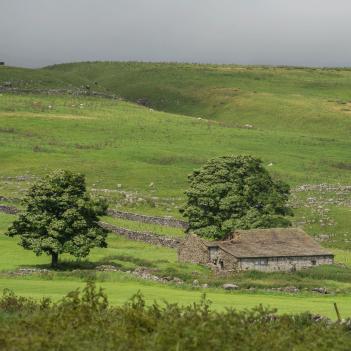Derelict field barn above Arncliffe