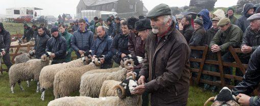 Tanhill sheep show May 2016