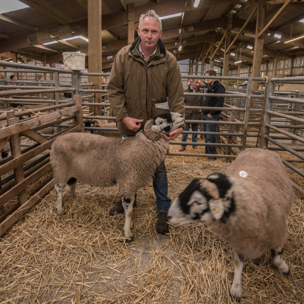 Swaledale Rams in the pens before the sale at Hawes Auction Mart