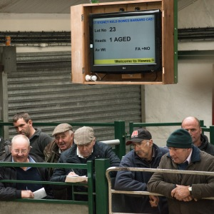 Hawes Auction Mart, looking on