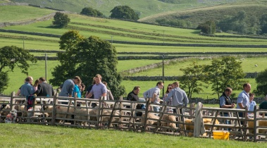 Sheep showing at Malham Show