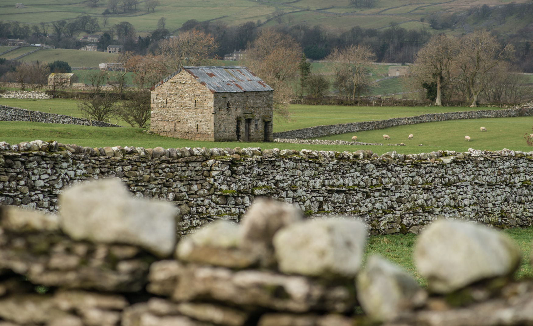 Walls and Barns : looking into Wensleydale from Thornton Rust, Yorkshire Dales