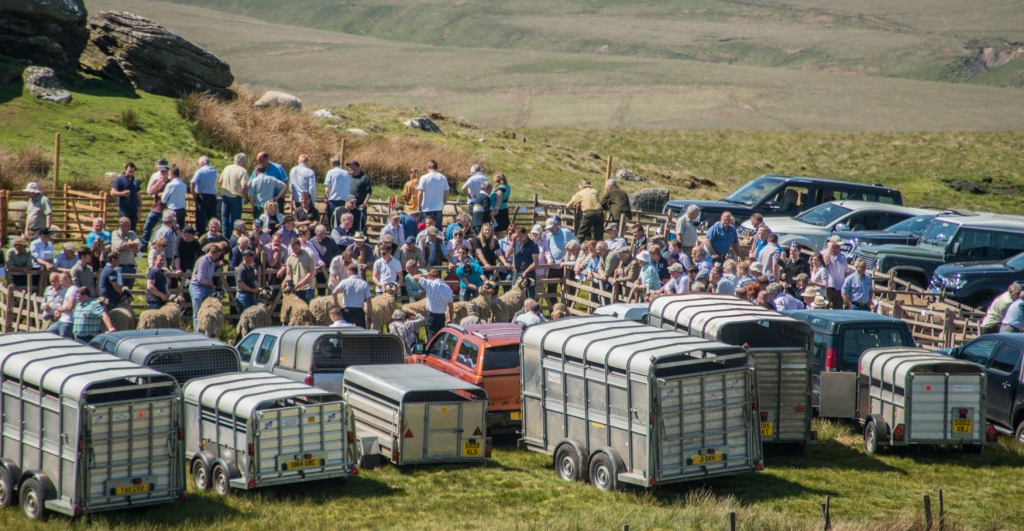 trailers and four-wheel drive vehicles fringe the edge of the show ground.