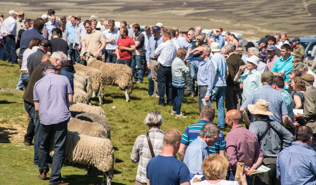 The line of swaledales being judged is interwoven by farmers and members of the public
