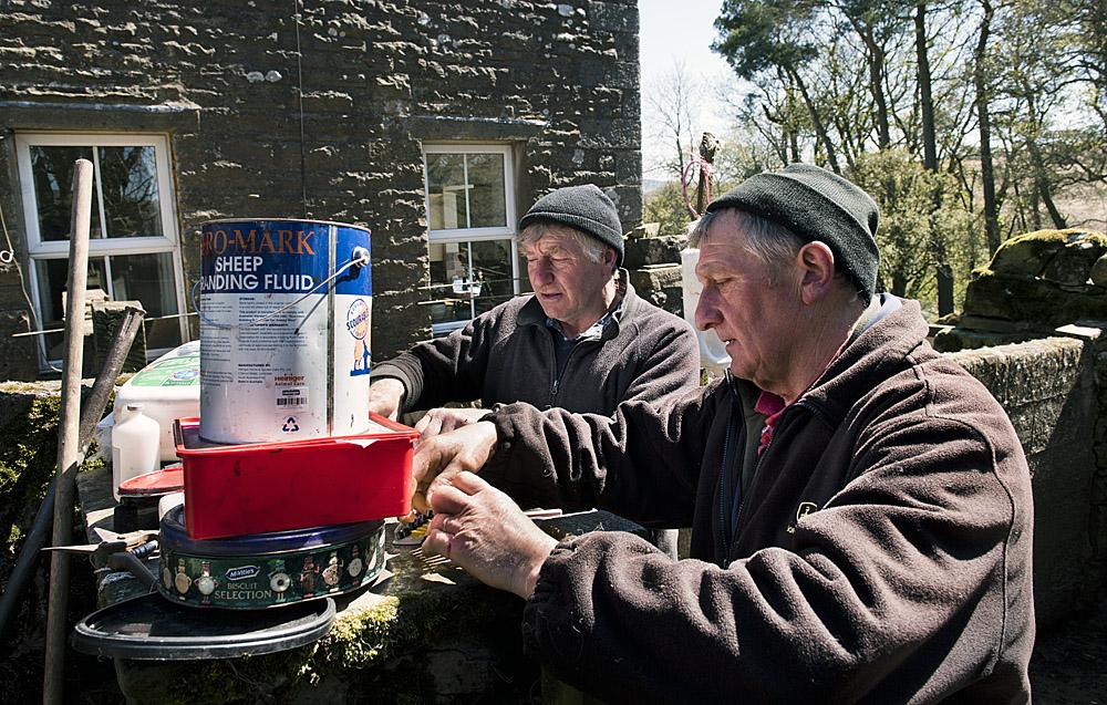 Preparing tags for new lambs, Hoggarths Farm