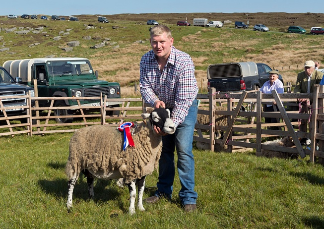 Prize winning Swaledale sheep at Tan Hill, 2017