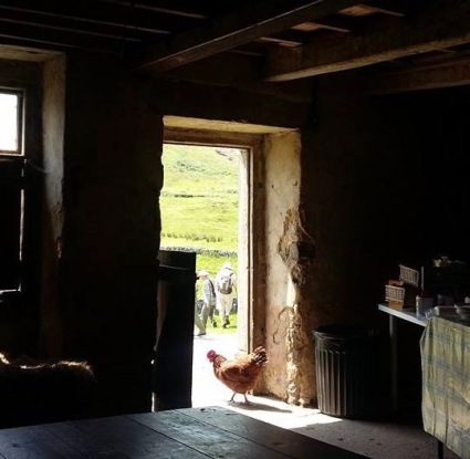 Chickens and walkers at Yockenthwaite Farm