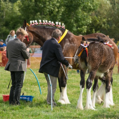 Carthorses at Kilnsey Show